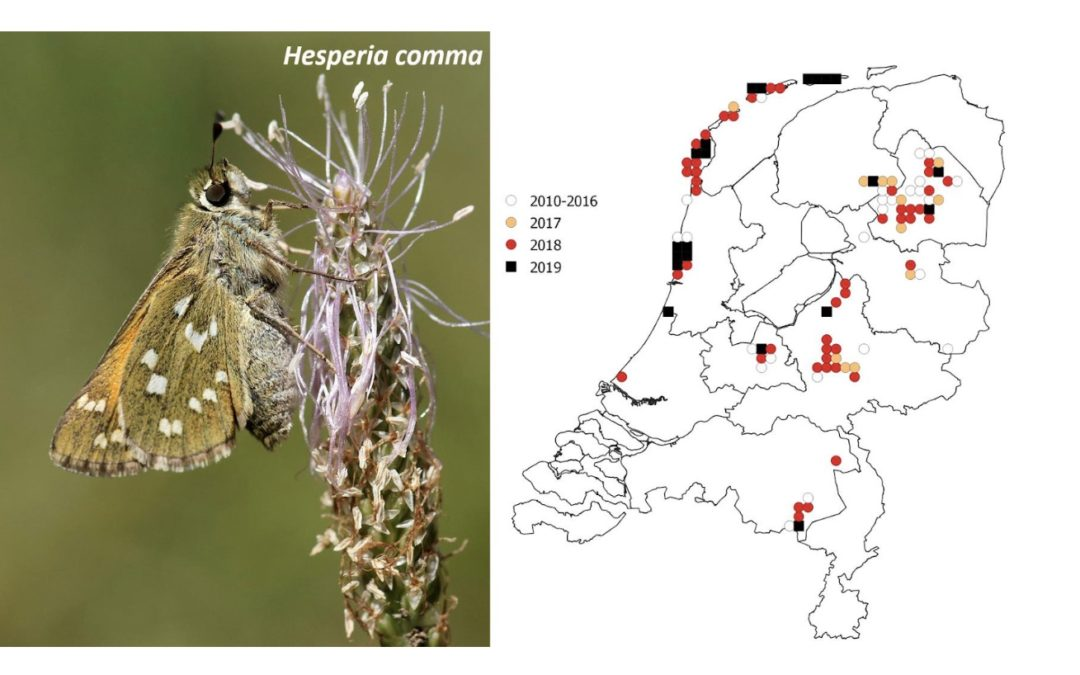 Habitat loss and drought huge blow for Dutch butterflies