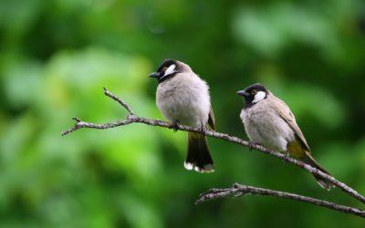 Corona and nature monitoring