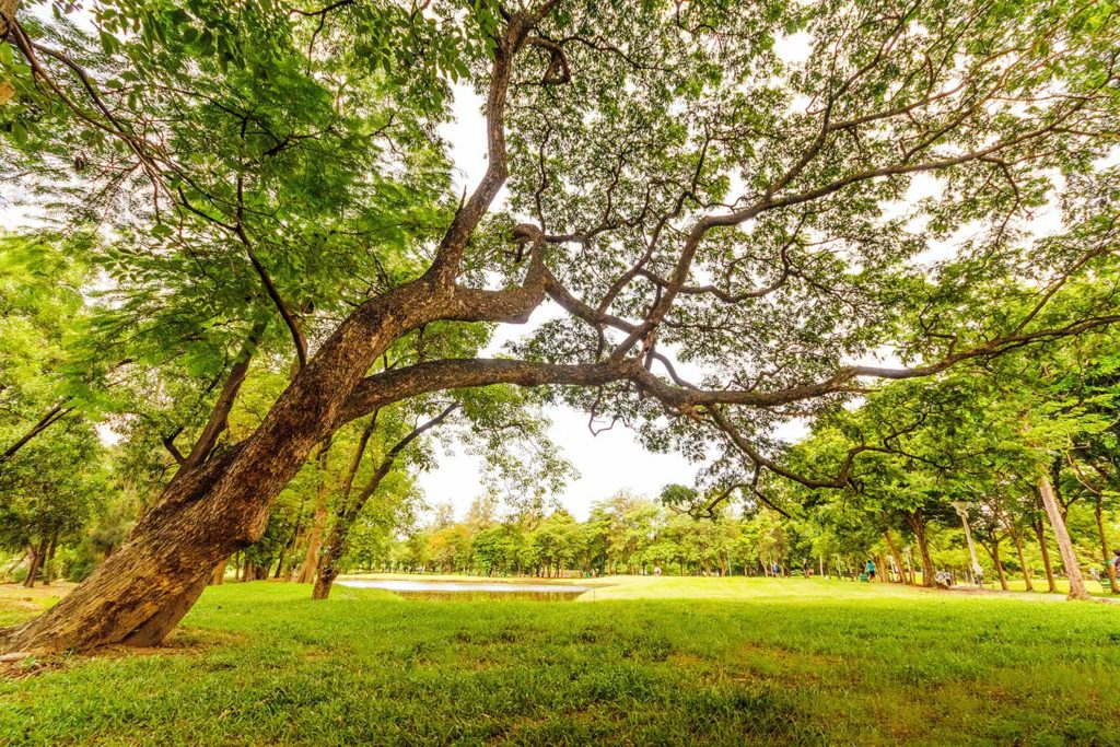 The importance of green space in cities