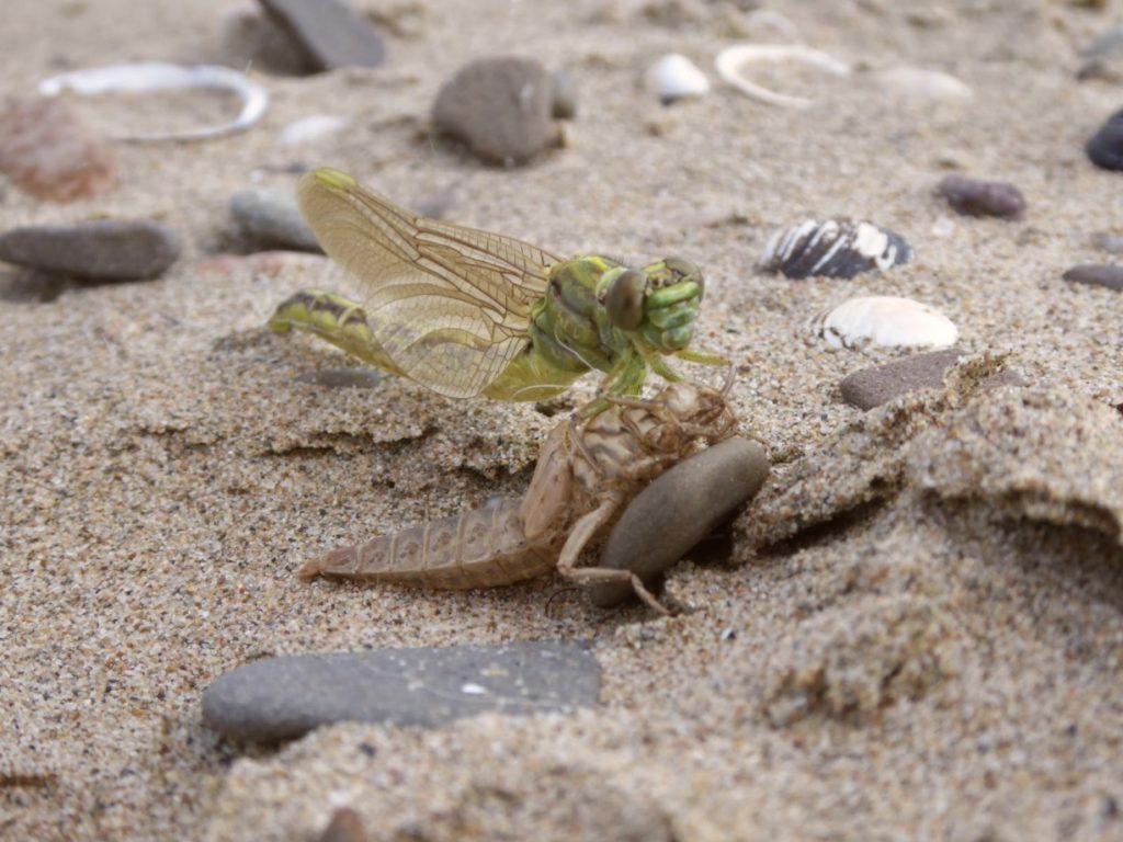 Hunt for river dragon(flie)s