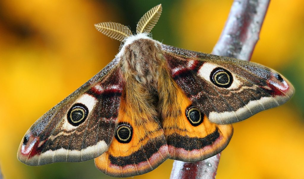 Moth declines in the UK