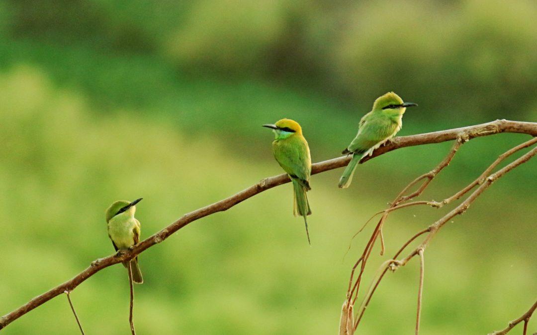 50 billion birds, but many species are rare