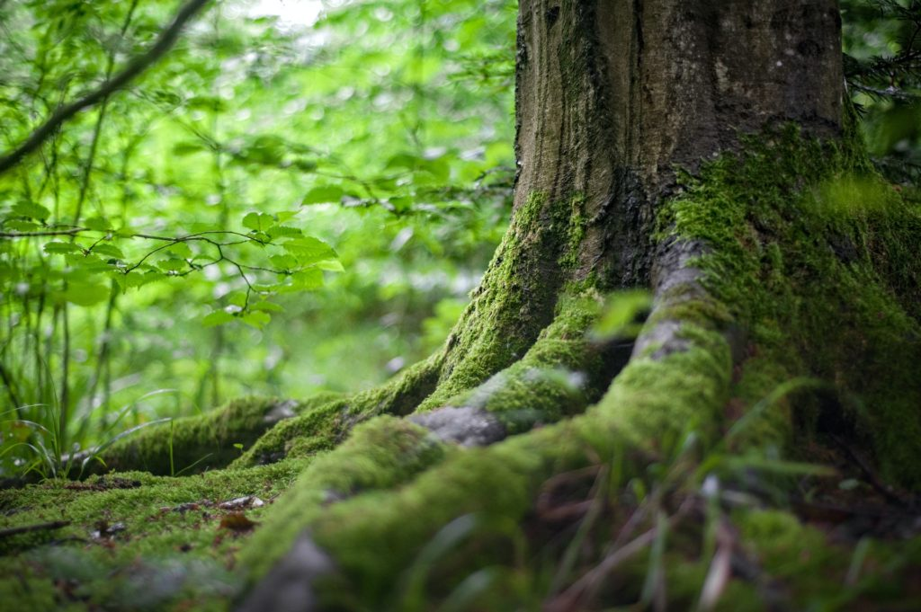 ACTION Accelerator Pilot WOW Nature has taken social involvement in forests a step further
