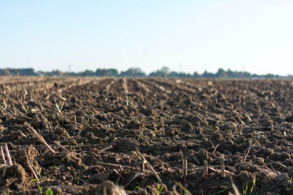 Open Soil Atlas workshops bring soil quality to light in Berlin